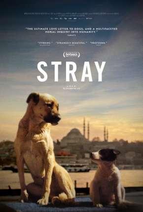 Filme Stray - 2021 Legendado